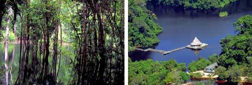 Floresta Amazônica Amazonas
